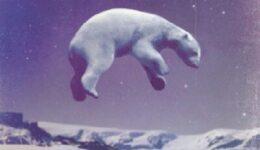 άσπρη αρκούδα (1)