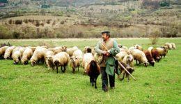 κτηνοτροφία-ktinotrofos-probata