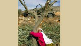 παλαιστινη 3α