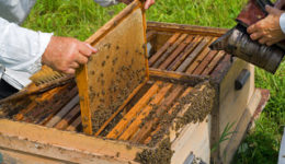 τα-μυκητοκτόνα-οδηγούν-στην-σταδιακή-εξαφάνιση-των-μελισσών