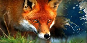 αλεπού στο παζάρι