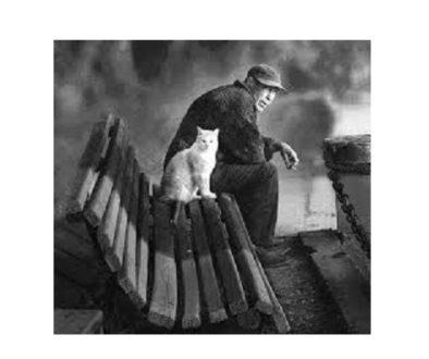 εργαζόμενος - γάτα