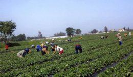 μετανάστες εργάτες