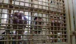 παλαιστίνιος κρατούμενος