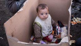 προσφυγοπουλο σε κούτα