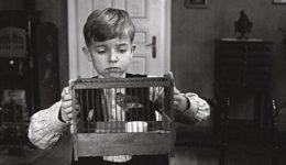 το παιδί και το κλουβί