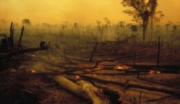 amazon-rainforest-fires