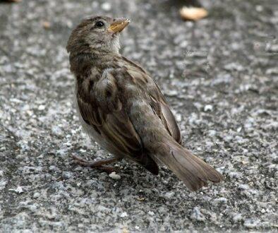 bird-