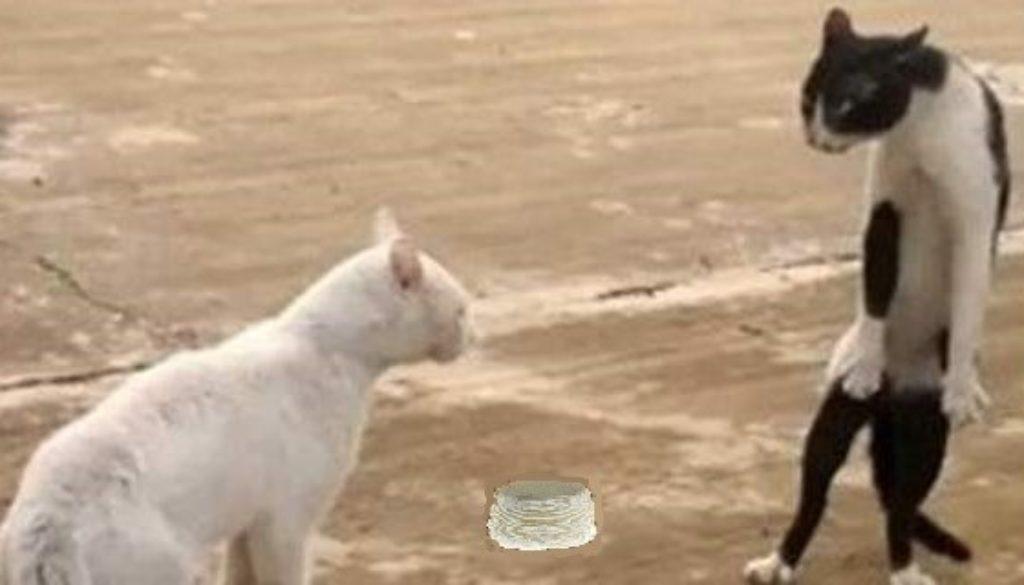 cat-cobra660