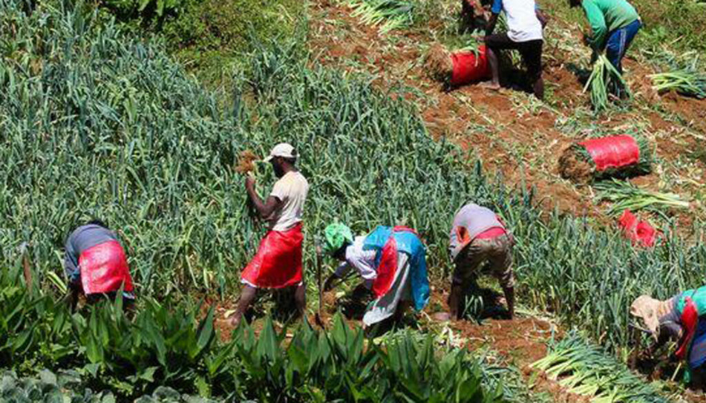 Κορωνοϊός - χωριά: Συναγερμός εστίες υπερμετάδοσης - Χιλιάδες εργάτες γης «μένουν σε παράγκες» στα χωριά(φωτο)
